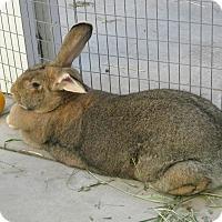 Adopt A Pet :: Hope - Bonita, CA