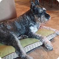Adopt A Pet :: Rumor - Springfield, MO