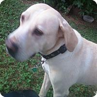 Adopt A Pet :: Janie - PORTLAND, ME