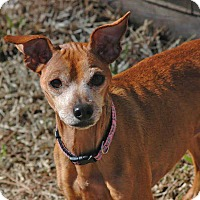 Adopt A Pet :: Nina - Virginia Beach, VA