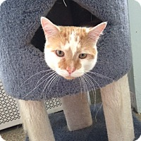 Adopt A Pet :: Irving - Chicago, IL