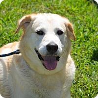 Adopt A Pet :: Lilly - Charleston, SC