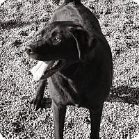 Adopt A Pet :: OLIVE - Gustine, CA