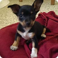 Adopt A Pet :: Izzy - Thousand Oaks, CA