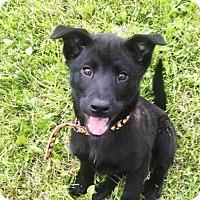 Adopt A Pet :: Brooke - rockford, IL