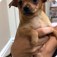 Adopt A Pet :: Paulie - Ft. Lauderdale, FL