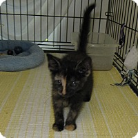 Adopt A Pet :: Allie - Harrisburg, NC