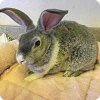Adopt A Pet :: Basil - Bonita, CA
