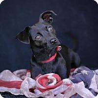 Adopt A Pet :: Betty - SAN PEDRO, CA