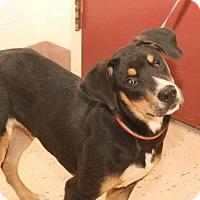 Adopt A Pet :: RADAR - McDonough, GA