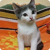 Adopt A Pet :: Little Girl - Berlin, CT