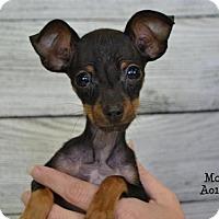 Adopt A Pet :: Mouse - Conroe, TX