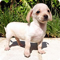 Adopt A Pet :: Tammy - Austin, TX