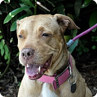 Adopt A Pet :: HOLLY - Deltona, FL
