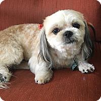 Adopt A Pet :: Priscilla - La Verne, CA