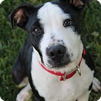 Adopt A Pet :: Maxx - Red Bluff, CA