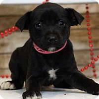 Adopt A Pet :: Danica - Waldorf, MD