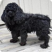 Adopt A Pet :: Mimi 33864564 - Westampton, NJ