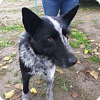 Adopt A Pet :: Bella - Visalia, CA