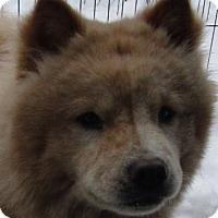Adopt A Pet :: Amaro - Coventry, CT