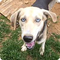 Adopt A Pet :: Maddie - Charlotte, NC