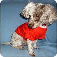 Adopt A Pet :: Bryce - Mooy, AL