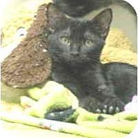 Adopt A Pet :: Charlotte and Tyler - Mesa, AZ