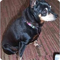 Adopt A Pet :: Ladybug - Nashville, TN