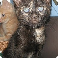Adopt A Pet :: Kida - Reston, VA