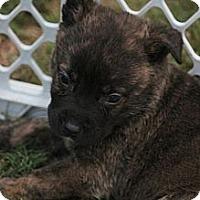 Adopt A Pet :: Kingston - Bloomsburg, PA