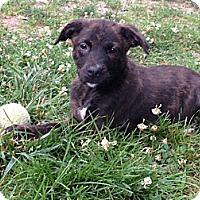 Adopt A Pet :: Baby Charlie - Marlton, NJ