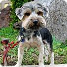 Adopt A Pet :: Camacho