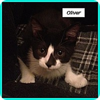 Adopt A Pet :: Oliver - Miami, FL