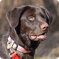 Adopt A Pet :: Daize - Cincinnati, OH