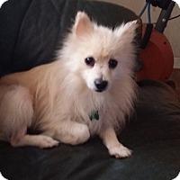 Adopt A Pet :: Deoge - conroe, TX