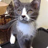 Adopt A Pet :: Victor - Mount Laurel, NJ