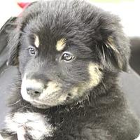 Adopt A Pet :: Teddy - Norwalk, CT