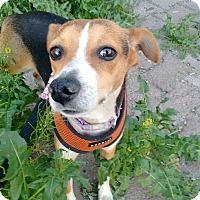 Adopt A Pet :: Lucky - San Diego, CA