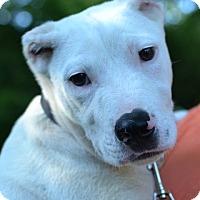 Adopt A Pet :: Zeke - Enfield, CT