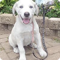 Adopt A Pet :: Twinkie - West Chicago, IL