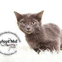 Adopt A Pet :: Maximilian - Denver, CO