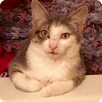 Adopt A Pet :: Jane - West Des Moines, IA