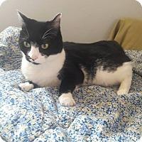 Adopt A Pet :: ZachCP - Carlisle, PA