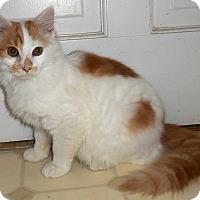 Adopt A Pet :: Othello - Chattanooga, TN