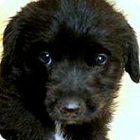 Adopt A Pet :: LEXIE(OUR