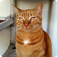 Adopt A Pet :: Momma - Sarasota, FL