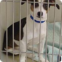 Adopt A Pet :: 49102 - Zanesville, OH