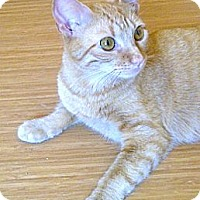 Adopt A Pet :: Honey - Escondido, CA