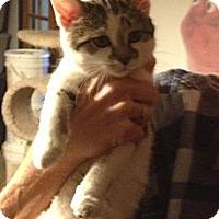 Adopt A Pet :: GiGi - Troy, OH