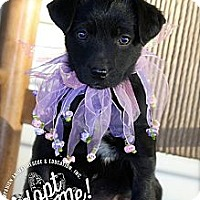 Adopt A Pet :: Mallory - Albany, NY